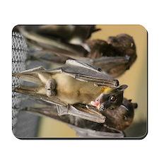 Straw-colored fruit bat 8 Mousepad