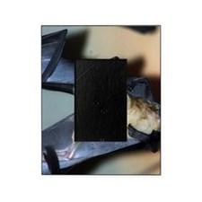 Straw-colored fruit bat 10 Picture Frame