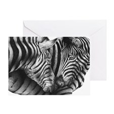 Zebras Postcard Greeting Card