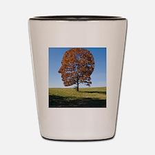 Transcendentalism Shot Glass