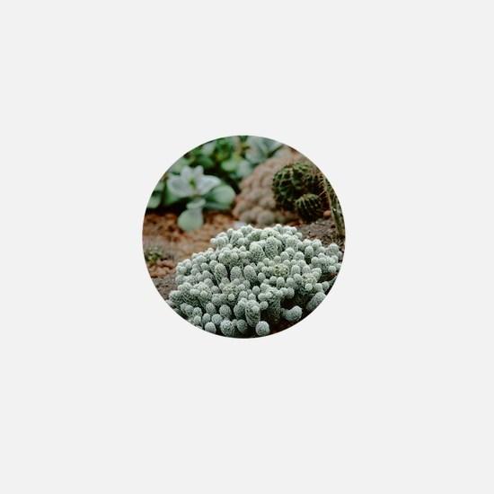 Cacti garden Mini Button