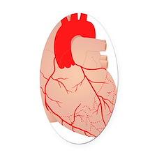 Coronary arteries, artwork Oval Car Magnet