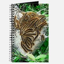 Brown tail moth larvae Journal