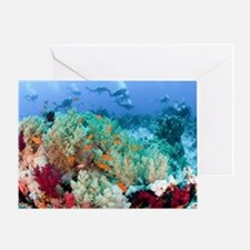 Coral Reef Red Sea, Ras Mohammed Greeting Card