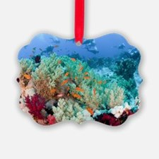 Coral Reef Red Sea, Ras Mohammed Ornament