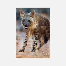 Brown hyena Rectangle Magnet