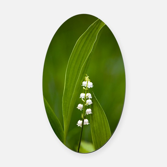 Convallaria majalis (Lily of the V Oval Car Magnet