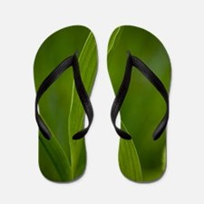 Convallaria majalis (Lily of the Valley Flip Flops