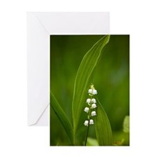 Convallaria majalis (Lily of the Val Greeting Card