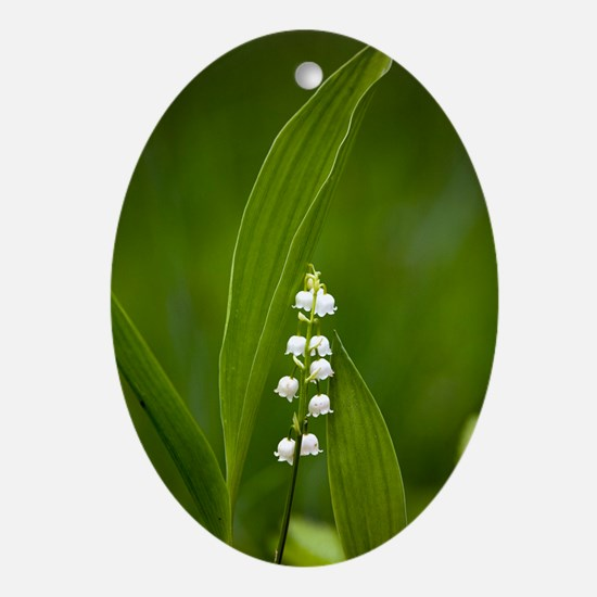 Convallaria majalis (Lily of the Val Oval Ornament