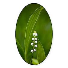Convallaria majalis (Lily of the Va Decal