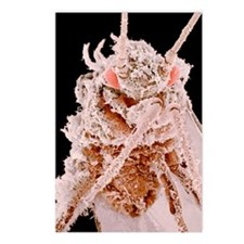 Cotton aphid, SEM Postcards (Package of 8)