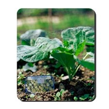 Brussels sprout plant Mousepad