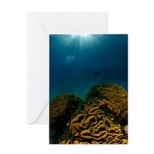 Coral reef, Red Sea Greeting Card