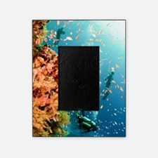 Coral Reef Red Sea, Ras Mohammed Picture Frame