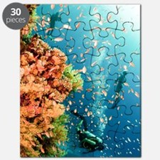 Coral Reef Red Sea, Ras Mohammed Puzzle