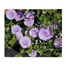 Convolvulus flowers Throw Blanket