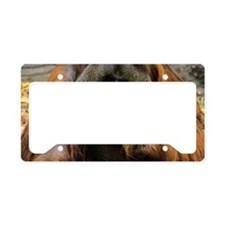 Bornean orangutan with a soft License Plate Holder
