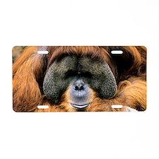 Bornean orangutan Aluminum License Plate