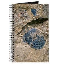 Brachiopod fossil shell Journal