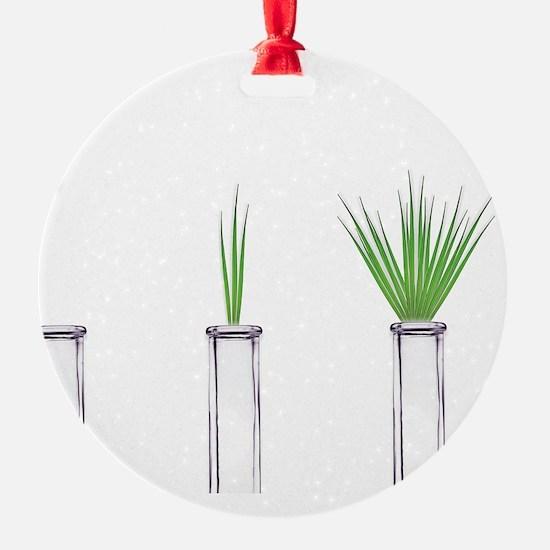Botany, conceptual image Ornament