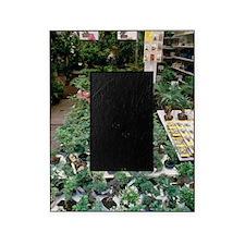 Bonsai plants Picture Frame