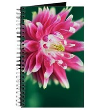 Columbine (Aquilegia sp.) flower Journal