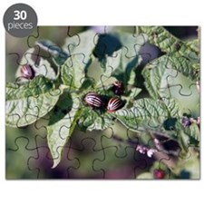 Colorado beetles on potato plant Puzzle