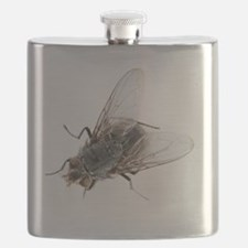 Common house fly Flask