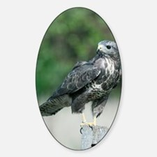 Common buzzard Decal