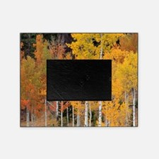 Autumn Aspen trees Picture Frame