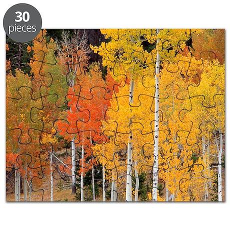 Autumn Aspen trees Puzzle