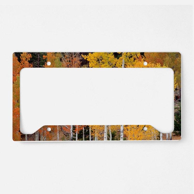 Autumn Aspen trees License Plate Holder