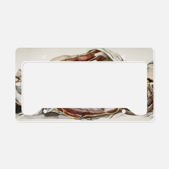 Autonomic nerves, 1844 artwor License Plate Holder