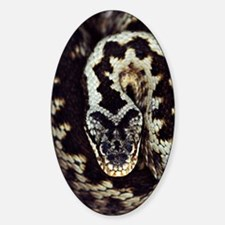 Common adder Decal