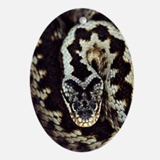 Common adder Oval Ornament