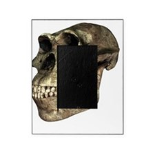 Australopithecus afarensis, artwork Picture Frame