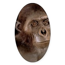 Australopithecus afarensis Decal