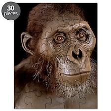 Australopithecus afarensis Puzzle