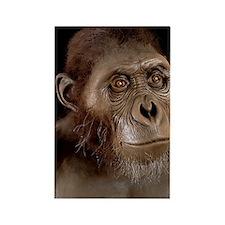 Australopithecus afarensis Rectangle Magnet