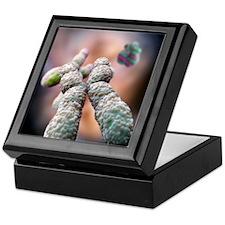 Chromosome, artwork Keepsake Box