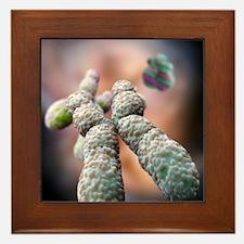 Chromosome, artwork Framed Tile