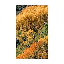 Autumn aspen trees Decal