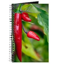 Chili Peppers (Capsicum annum) Journal