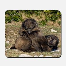 Chacma baboon grooming pair Mousepad