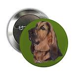 Exquisite Bloodhound 2.25