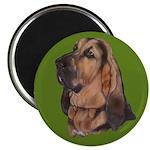 Exquisite Bloodhound Magnet