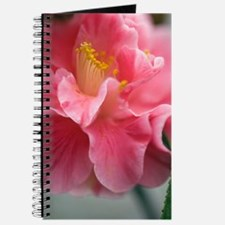 Camellia japonica Journal