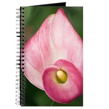 Calla Lily (Zantedeschia aethiopica) Journal