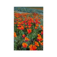 Californian Poppies (Eschscholzia Rectangle Magnet